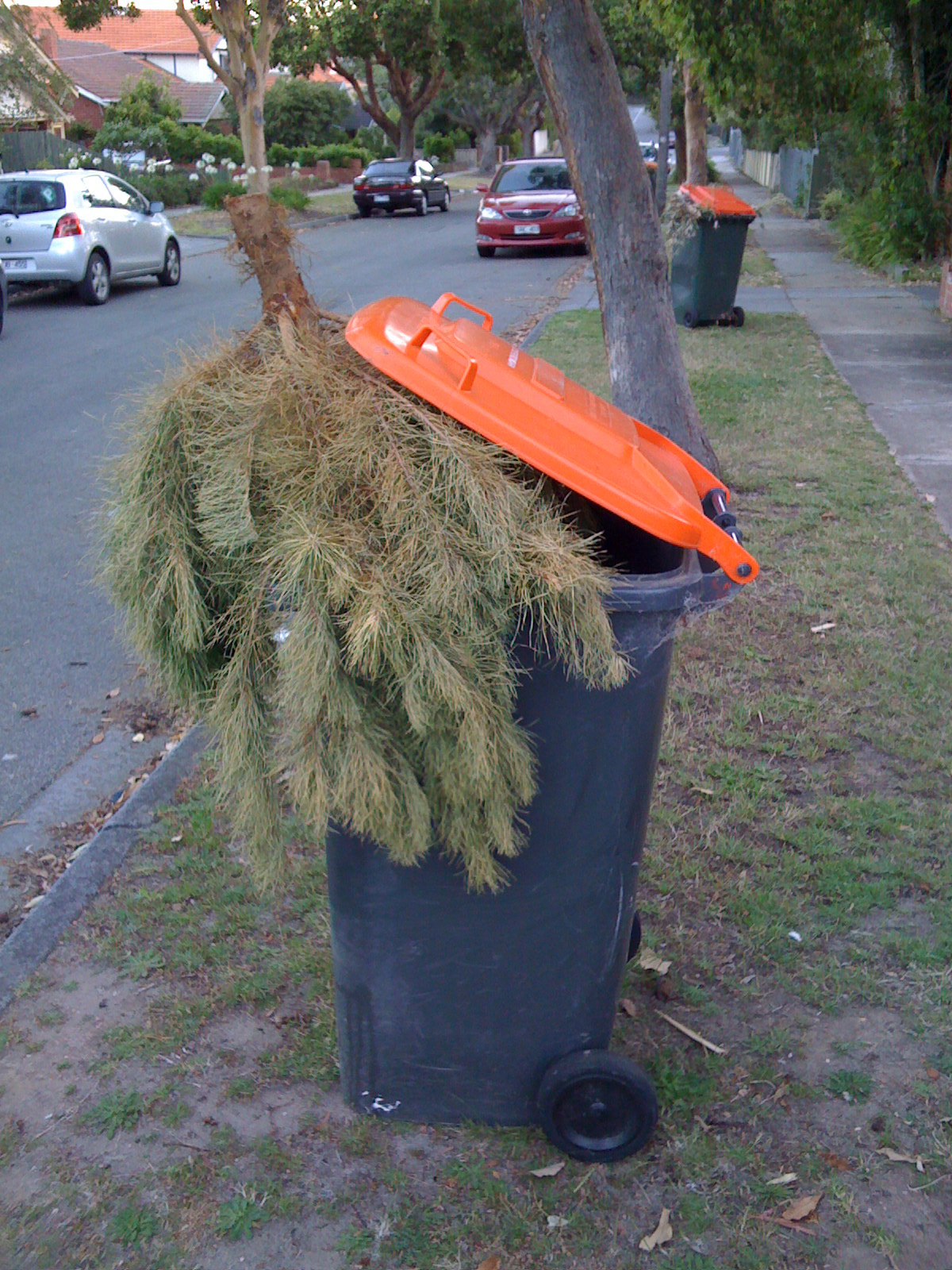 i did a quick google image search for dead christmas tree and was surprised at the